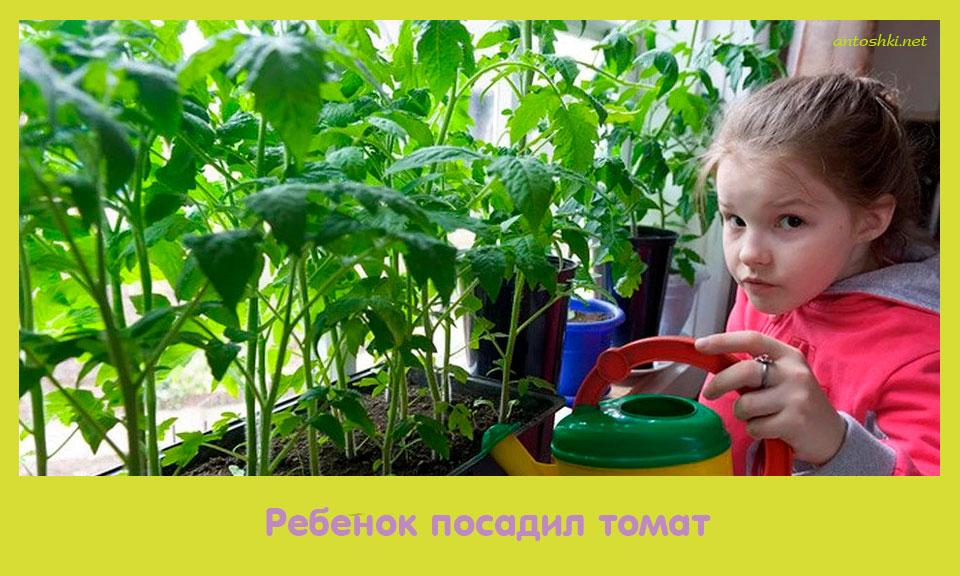 ребенок, посадить, томат