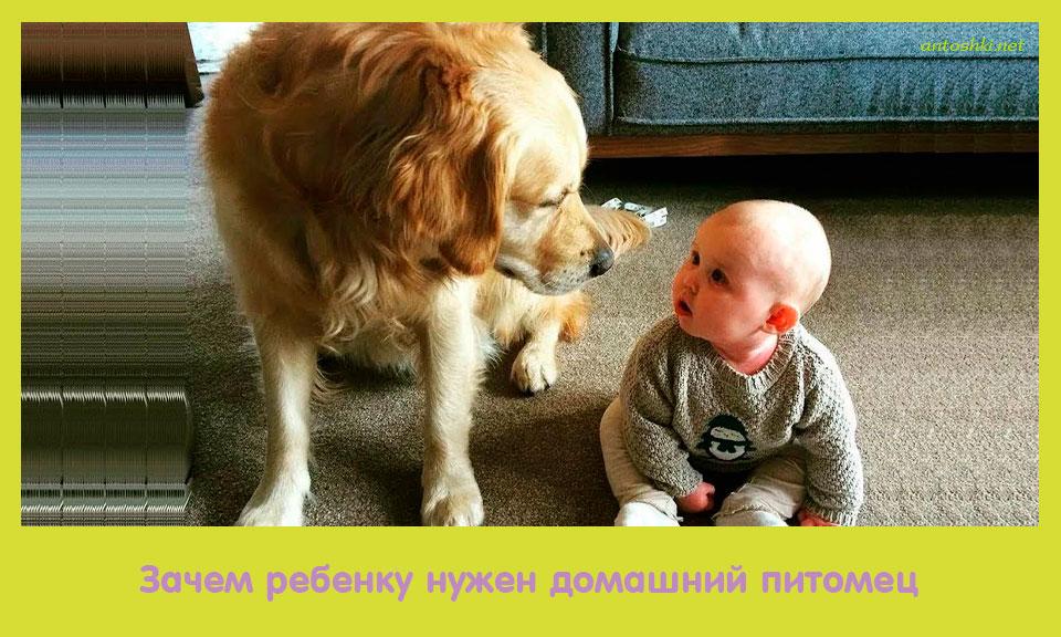 ребенок, нужный, домашний, питомец